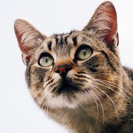 Articles pour chats