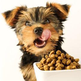 Alimentation pour chiens